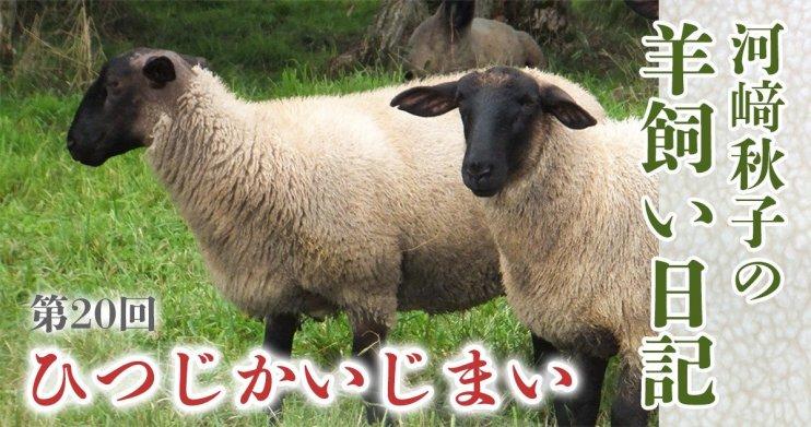 羊飼い日記20